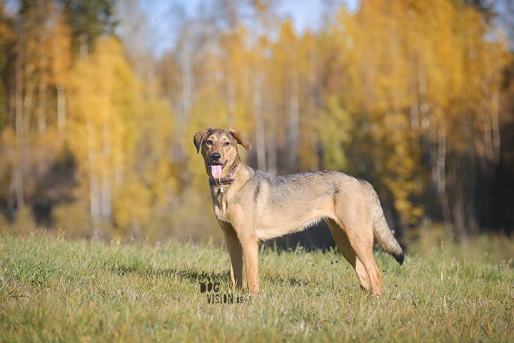 Hondenfotografie, actiefotografie | www.DOGvision.be