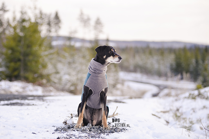 Ravasz | Erdélyi Kopó/ Transylvaninan hound | www.DOGvision.be