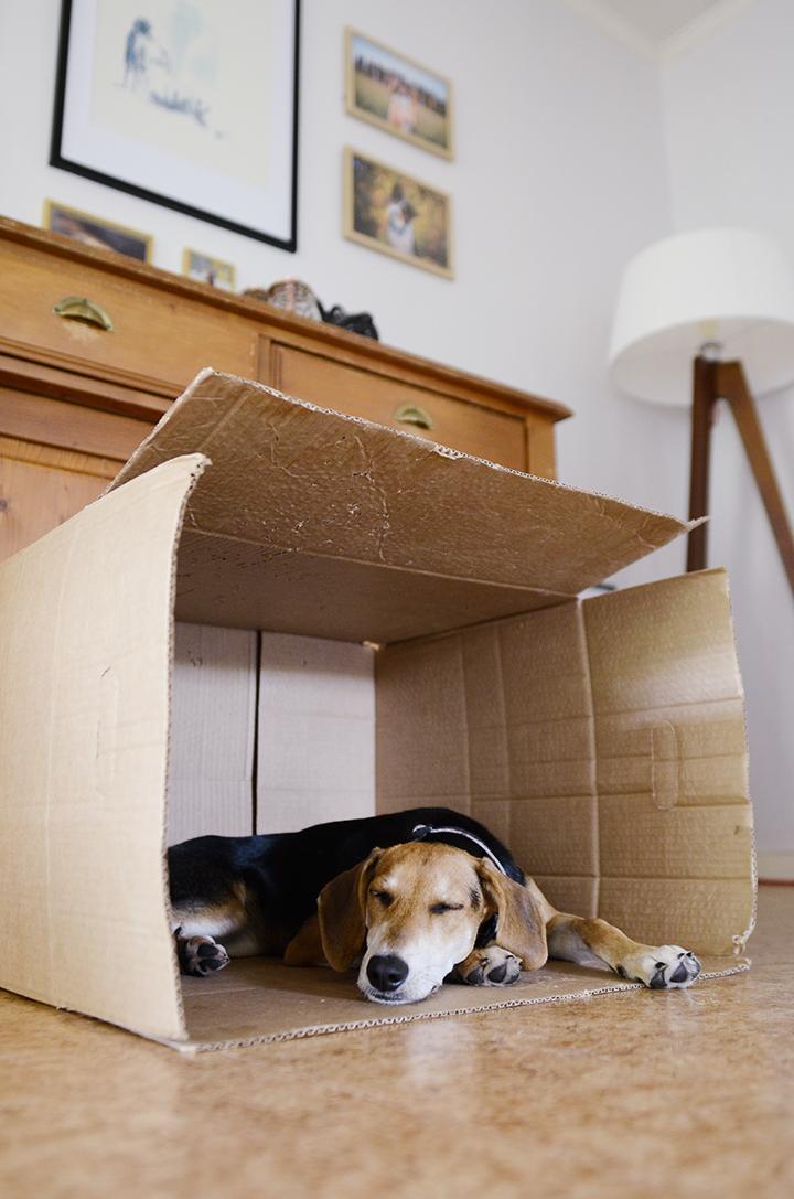 rescue puppy sleeping in a cardboard box, www.dogvision.eu