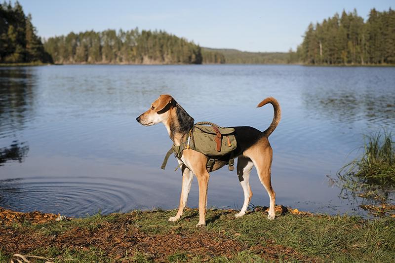Mondo Cane, dog adventure story DOGvision.eu