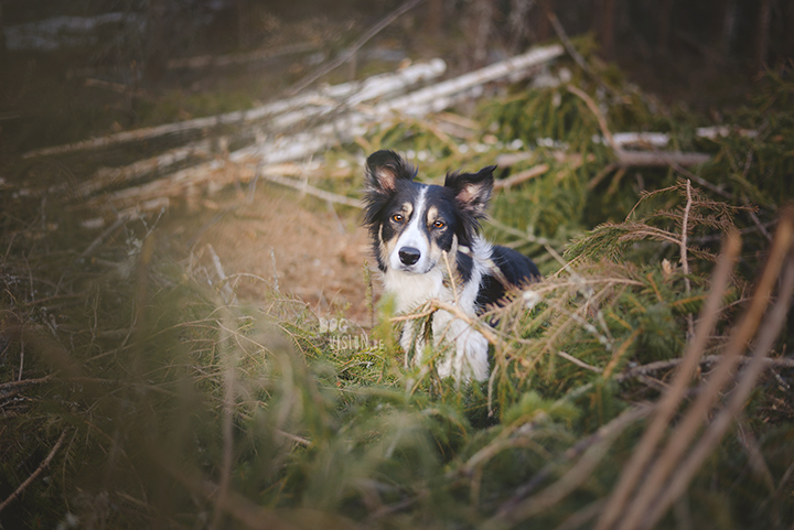 #TongueOutTuesday (15), dog photography project, weekly photo project, dog photography Sweden