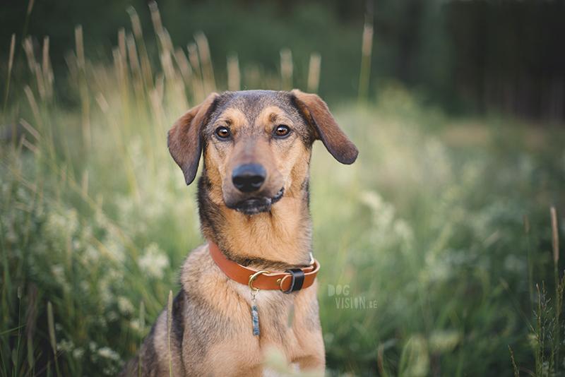 #TongueOutTuesday (25), hondenfotografie, creatief fotografieproject, commerciële hondenfotografie Europa, honden influencer, hondenblog op www.DOGvision.be