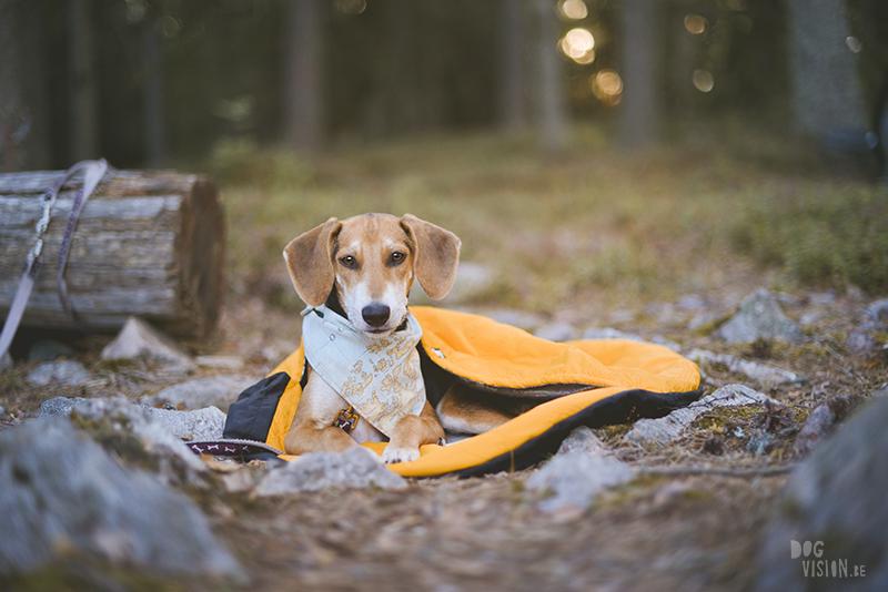 kamperen met honden in Zweden, hondenfotografie, lightroom presets hondenfotografie, tent, Dalarna, rescue honden, hurtta outback dreamer, www.dogvision.be