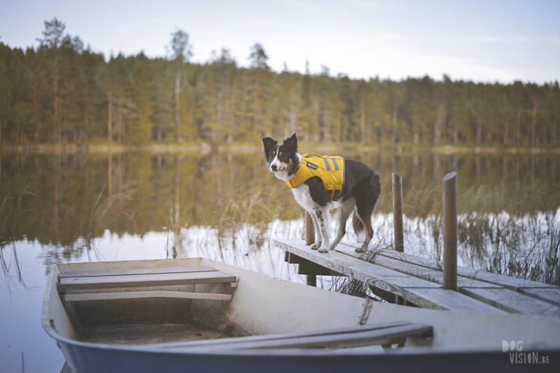 Camping with dogs in Sweden, Dalarna outdoors, dog photography and blog, www.DOGvision.eu