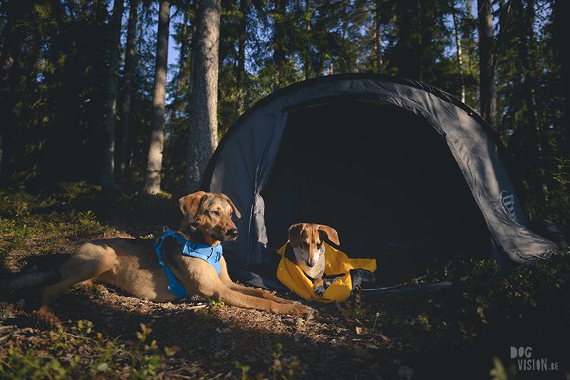 kamperen met honden in Zweden, hondenfotografie, lightroom presets hondenfotografie, tent, Dalarna, rescue honden, www.dogvision.be