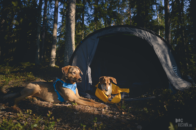 Camping with dogs in Sweden, camping wild, ruffwear harness, hurtta sleeping bag, dog photographer Europe, www.DOGvision.eu