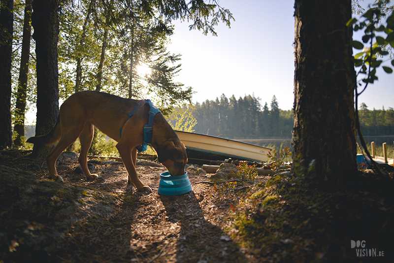 dogs in a tent, Camping with dogs in Sweden, Dalarna outdoors, dog photography and blog, www.DOGvision.eu