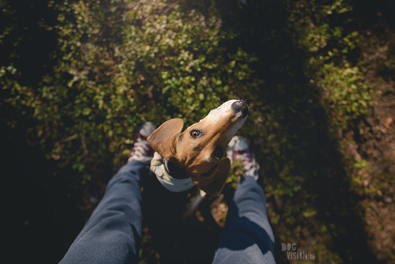 Kamperen met honden in Zweden, Borlänge, Dalarna, hondenfotografie, www.dogvision.be