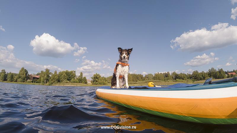 bouwen cabin, Zweden, Zweden blog, hondenfotografie, honden blog, hondenfotografie Zweden, www.DOGvision.be