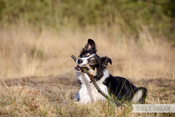 www.DOGvision.be | dog photography | hondenfotografie | tips & tricks