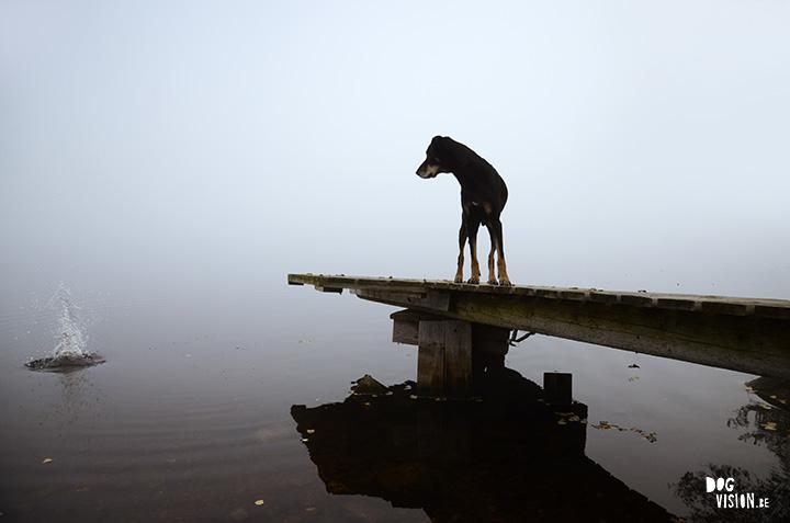 http://www.dogvision.be/blog/fototip-tegenlicht-silhouetten/
