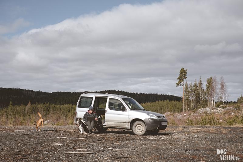 #TongueOutTuesday (12), hondenfotografie Zweden, Fenne Kustermans, Border Collie Luna Tale Mogwai, hondenwandeling, hondenblog, honden in de natuur, www.DOGvision.be