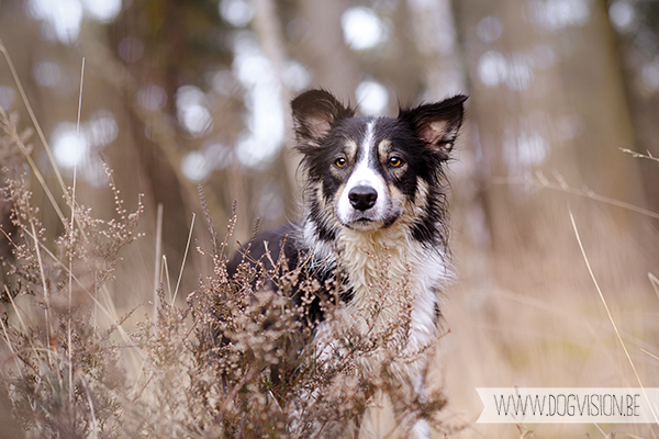 DOGvision | dog photography | Belgium | dogwalk