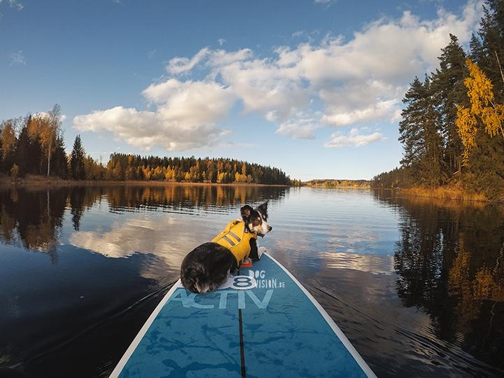 SUP | Oktober in Zweden | hondenfotografie en blog | www.DOGvision.be