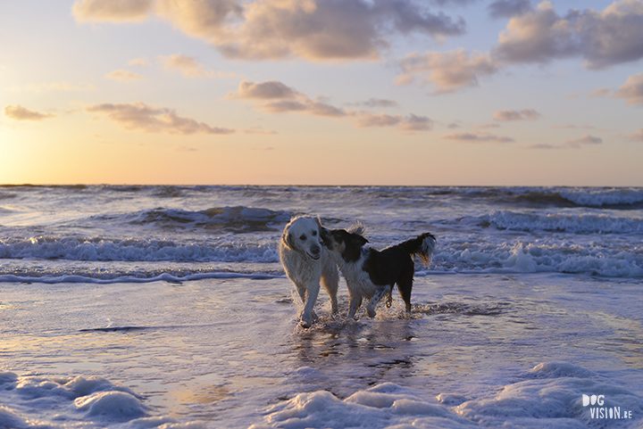 Dogs @ the beach   www.DOGvision.be   dog photography