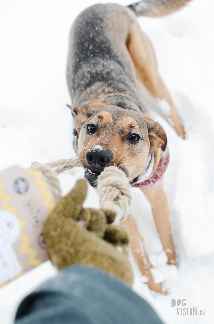 #TongueOutTuesday (03)| hondenfotografie en blog| avonturen met honden in Dalarna, Zweden| www.DOGvision.be