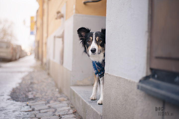 Training in Stockholm with Oona and Mogwai   dog photography blog  www.DOGvision.eu