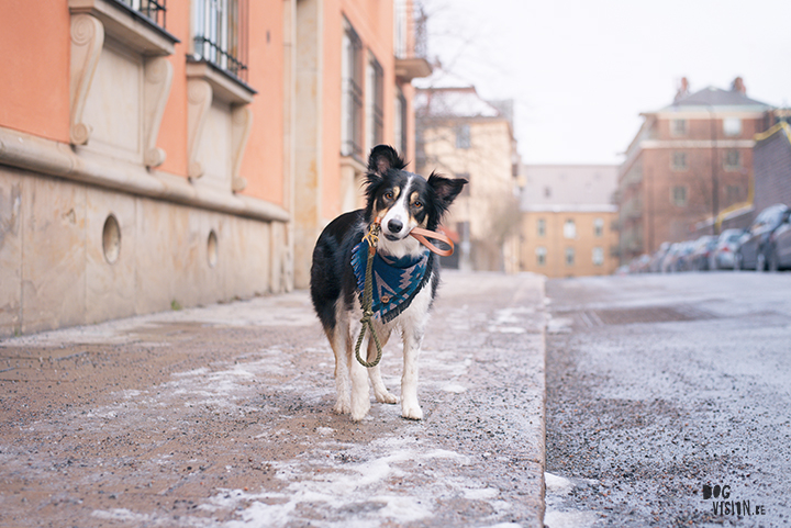 Training in Stockholm with Oona and Mogwai | dog photography blog| www.DOGvision.eu