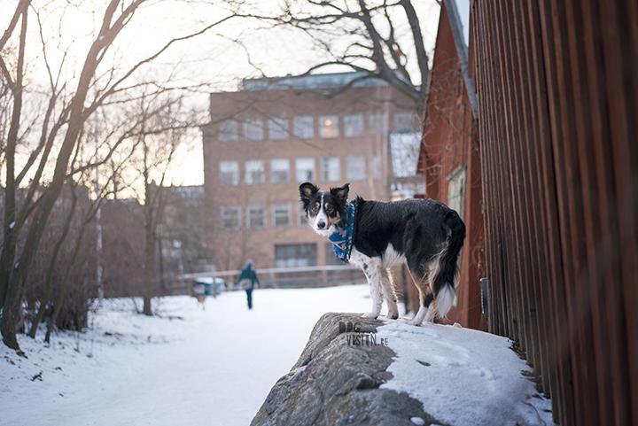 Trainen in Stockholm met de honden | www.DOGvision.be