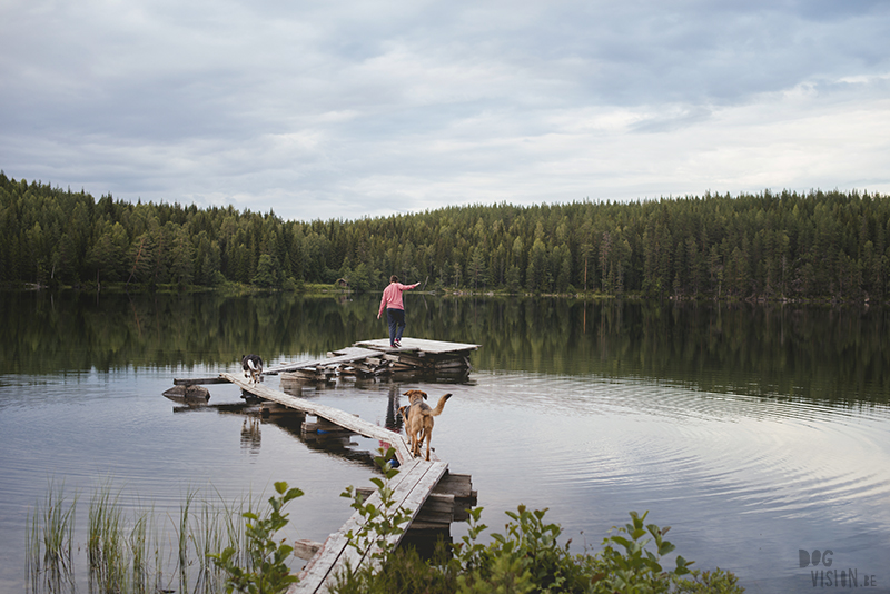 Hondenfotografie Fenne Kustermans, Zweden, Dalarna, www.DOGvision.be
