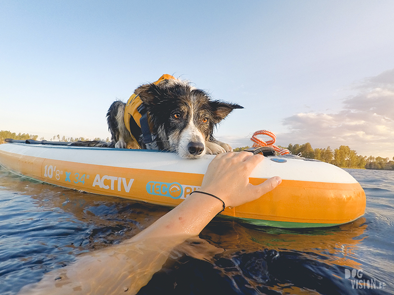 Sunset SUP with dogs, dog photography , gopro dog, blog on www.DOGvision.eu