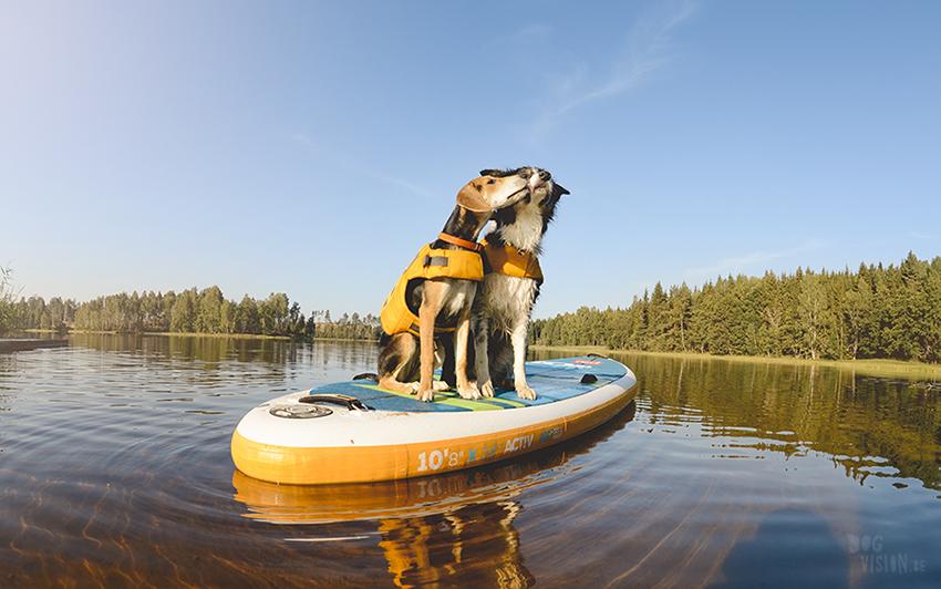SUP met honden, stand uo paddle in Zweden, honden met ruffwear zwemvest, avontuur met honden, www.DOGvision.be