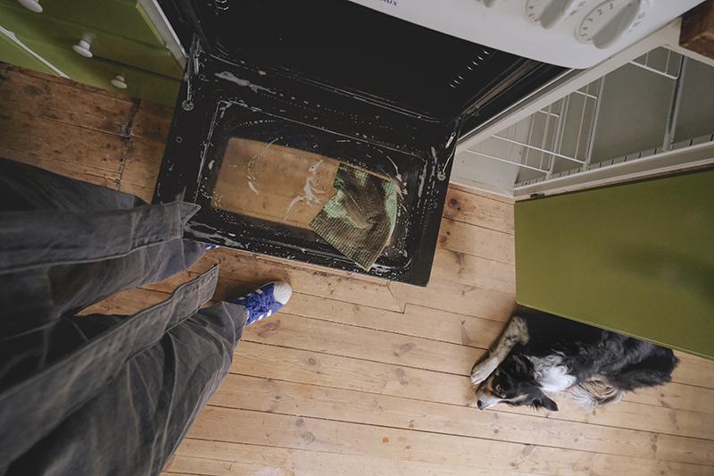 Thomas stofzuiger Aqua pet & family, review, stofzuiger zonder stofzak test, huisdieren en schoonmaken, www.DOGvision.be