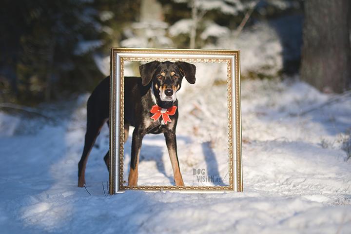 Happy Holidays | Christmas dog | dog photography | www.DOGvision.eu