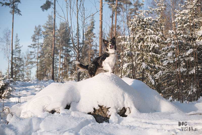Dog blog, dog photography inspiration, dogs in Sweden, European dog photographer, www.DOGvision.eu