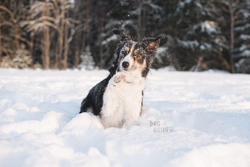 Dog blog, dog photography inspiration, dogs in Sweden, European dog photographer, www.DOGvision.eu