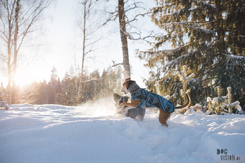 honden in Zweden, verhuizen naar Zweden, wandelen met honden in Zweden, hondenfotografie, commerciele hondenfotografie, hondenblog, www.DOGvision.be