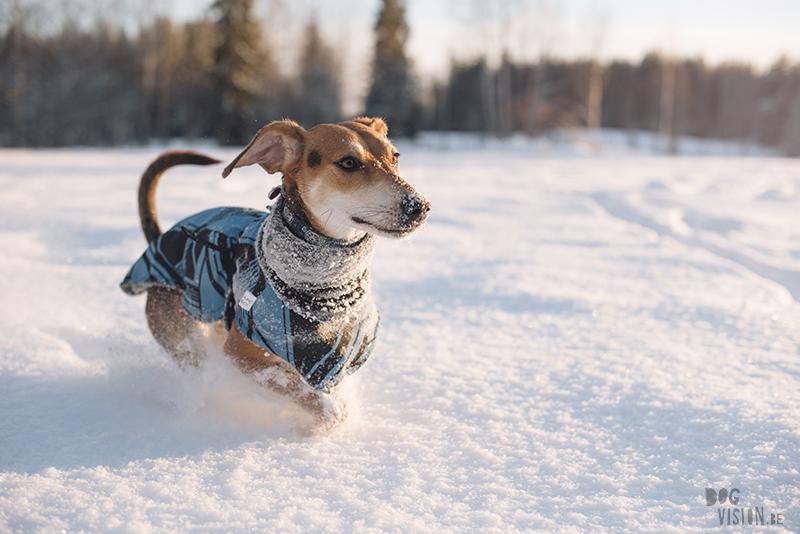 #TongueOutTuesday (05), dogvision hondenfotografie, wandelen met honden in Zweden, verhuizen naar Zweden met honden, www.dogvision.be