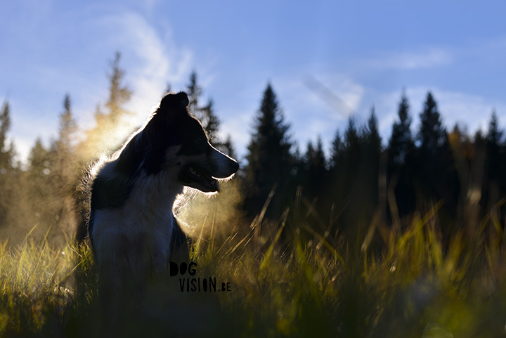 DOGvision photography | dog photography tips & tricks| www.DOGvision.be