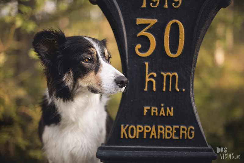 #TongueOutTuesday (34), European dog photographer blogger and artist Fenne Kustermans, Life with dogs in Sweden, Swedish adventure dogs, www.DOGvision.eu