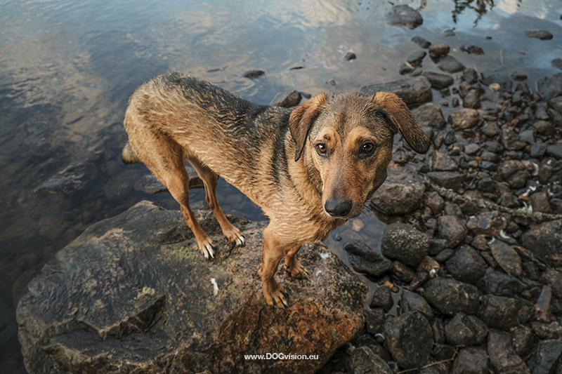 Testing new dog photography gear: the Fujifilm Xt-4, www.DOGvision.eu