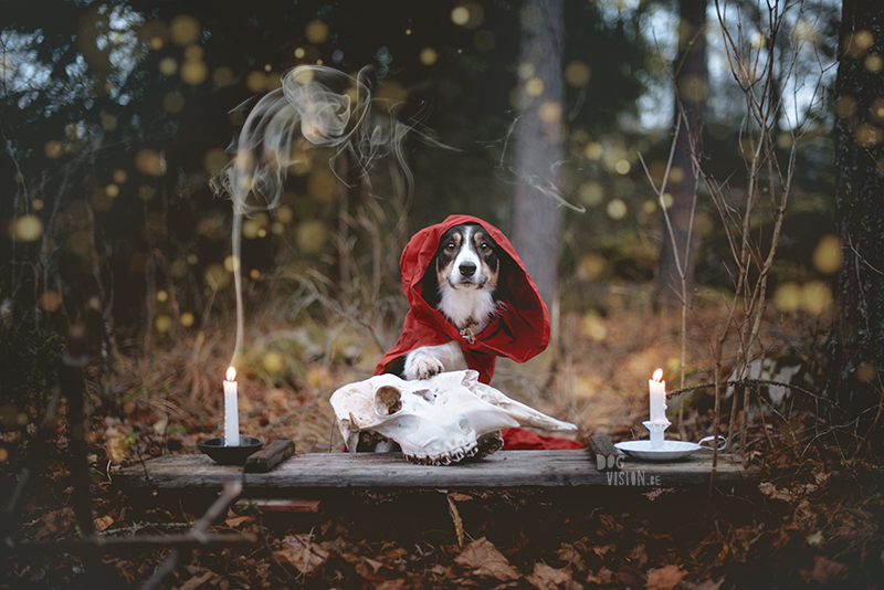 Occult day, tarot, dog photographer, European dog photographer, tarot reading, candles, witchcraft, www.dogvision.eu