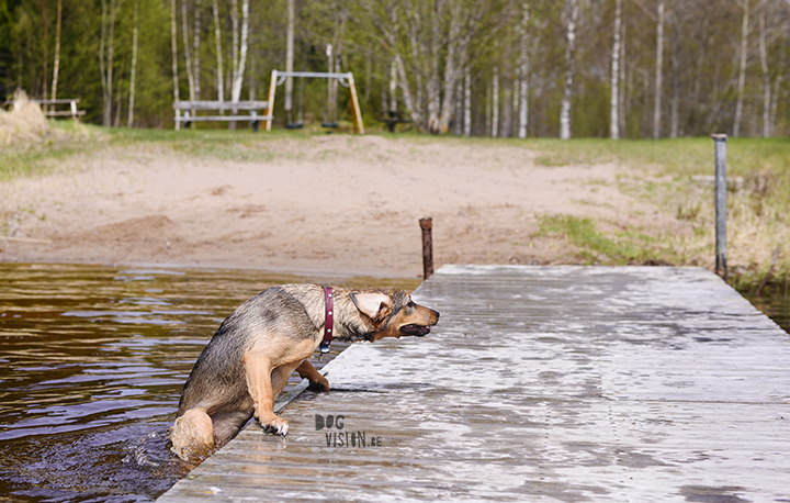 Trying to get out of the lake after falling in | Rescue mutt Oona | www.DOGvision.be