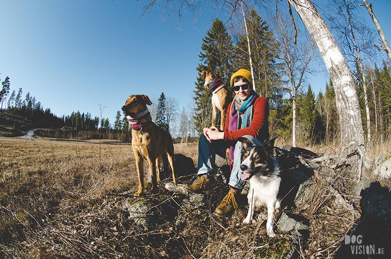 #TongueOutTuesday (08), Fenne Kustermans hondenfotografie, honden in Zweden, Dalarna, lifestyle hondenfotografie, www.DOGvision.be
