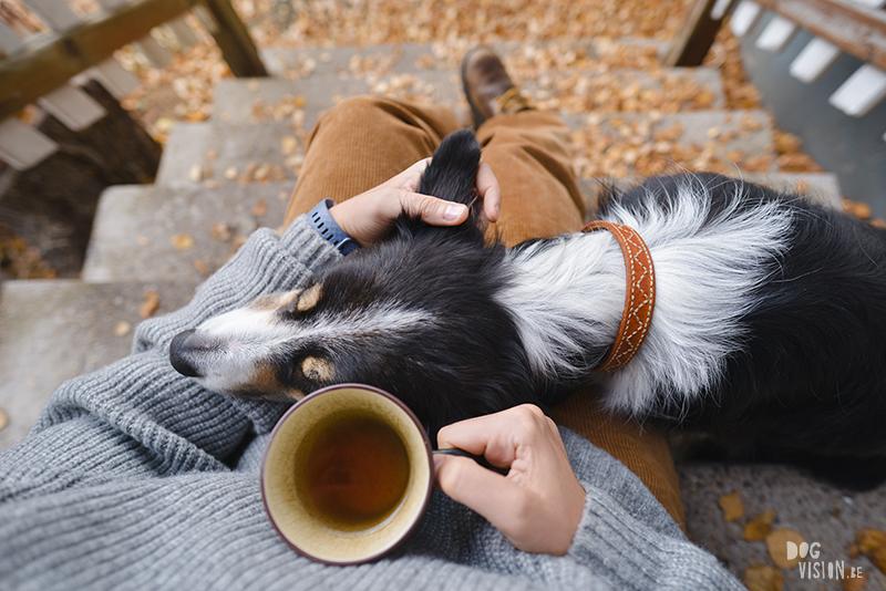 hygge hond, hondenfotografie, honden in Zweden, www.dogvision.be