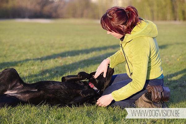 Nuna  (Black labrador retriever)   www.DOGvision.be   dog photography