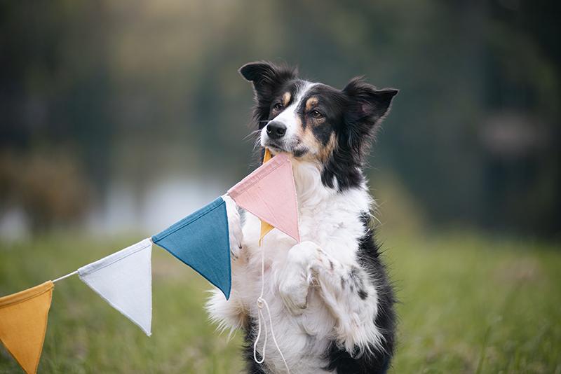 Hondenverjaardag, www.DOGvision.be