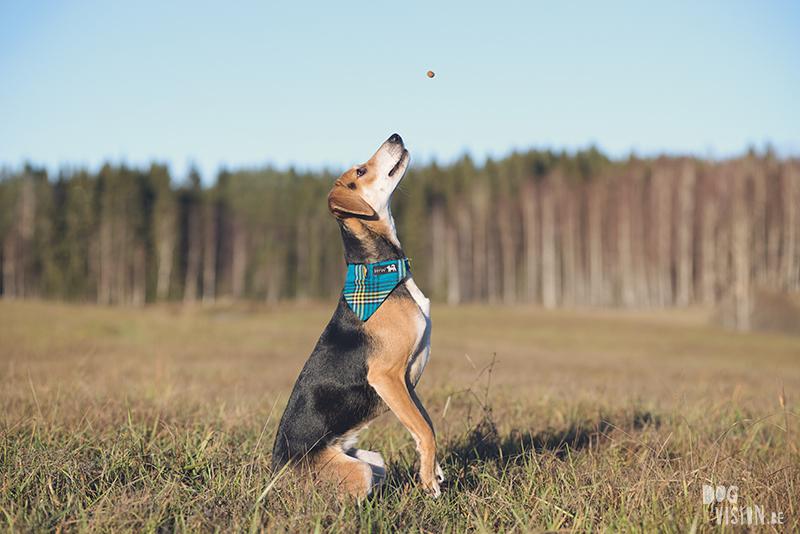 #TongueOutTuesday (51), hondenfotografie Zweden, honden blog, reizen met honden, Belgen in het buitenland, www.DOGvision.be