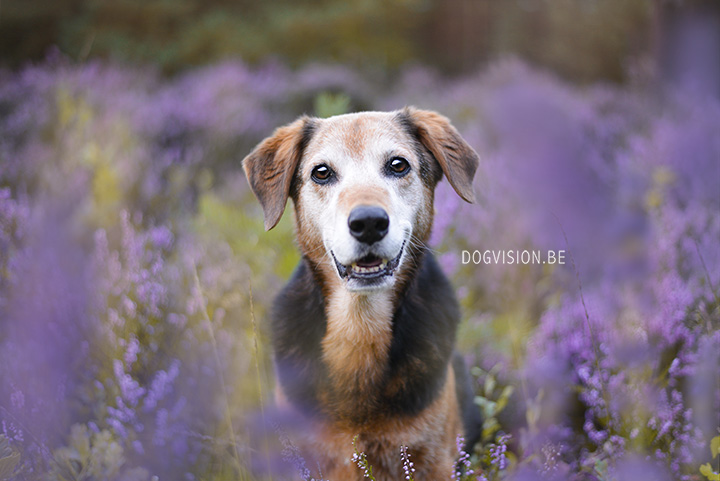 Ziggy | Mutt | DOGvision photography