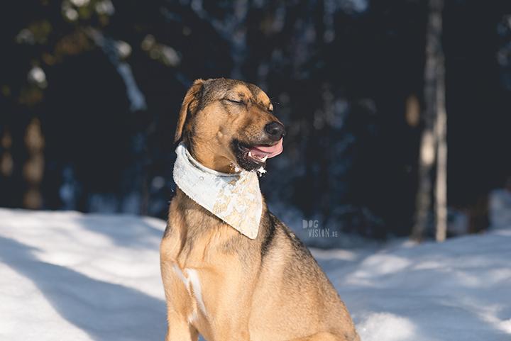 #TongueOutTuesday (09)| wekelijkse honden blog uit Zweden| www.DOGvision.be