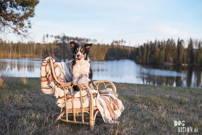 #TongueOutTuesday (18), dog photography www.DOGvision.eu, Fenne Kustermans Belgian artist Sweden.