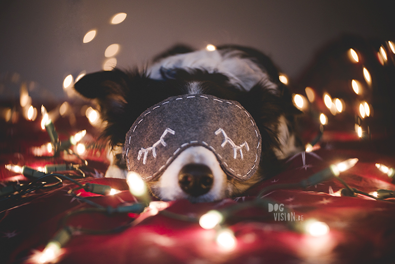 Christmas dog photography, dog blogger, European dog photography, www.DOGvision.eu