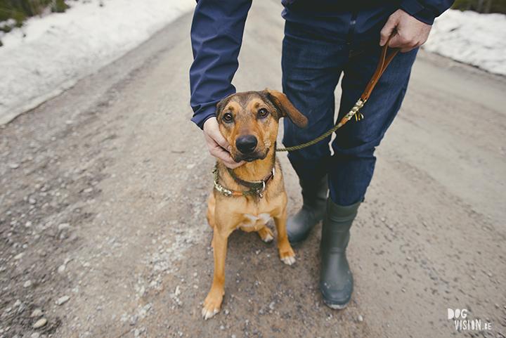Airbnb huis in Ljusdal, Gävleborg, reizen met honden in Zweden, hondenfotografie, www.DOGvision.be