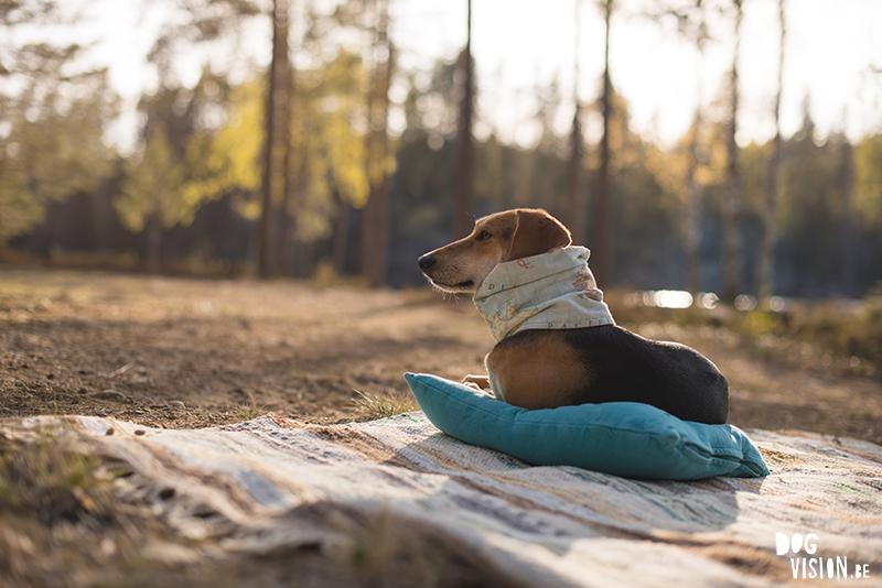 #TongueOutTuesday (22), Fenne Kustermans hondenfotografie, wandelen met honden in Zweden, Belg in Zweden, hondenblog, creatieve hondenfotografie, lifestyle natuur, www.DOGvision.be