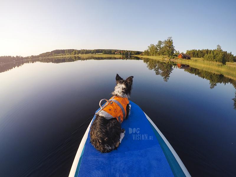 Fenne Kustermans hondenfotografie, fotografie Dalarna Zweden, wandelen met honden in Zweden, Belgen in Zweden, www.DOGvision.be