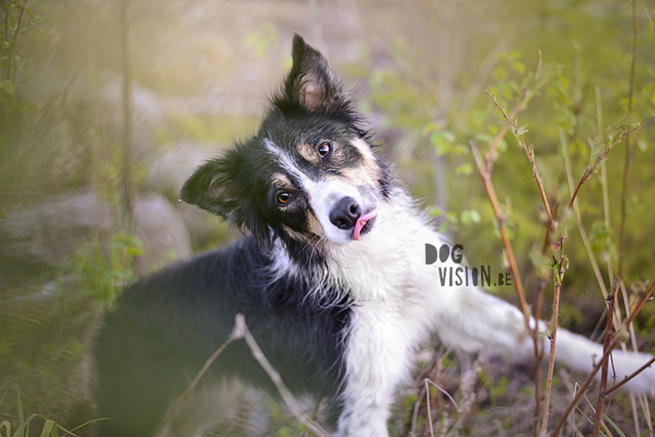 #TongueOutTuesday (21) | dog photography on www.DOGvision.be